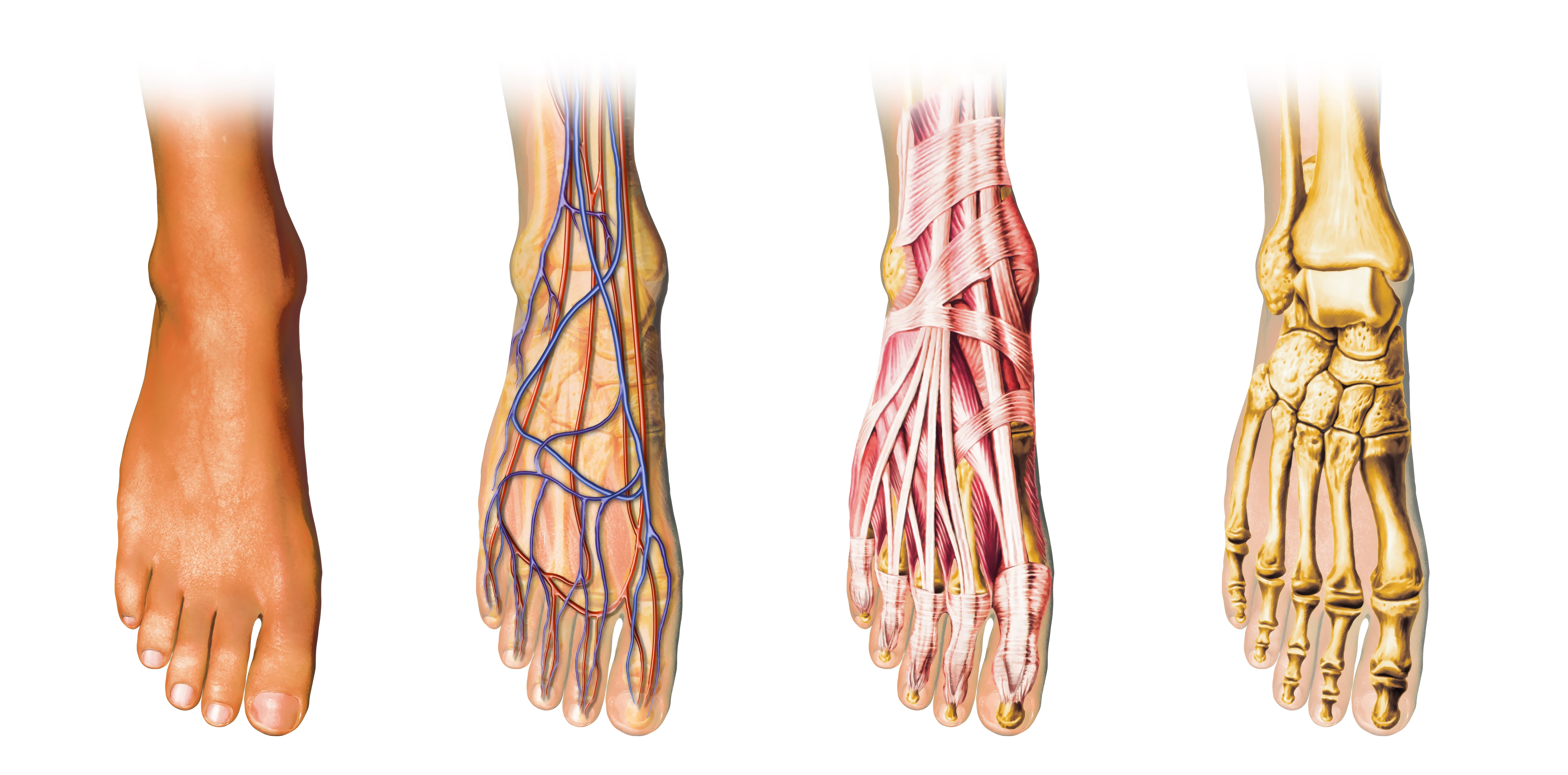 Easton orthopaedics -